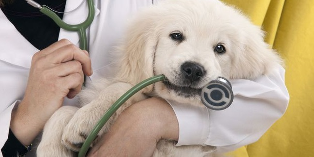 Veterinarians Palm Harbor FL